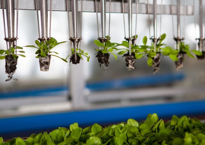 Subsidie voor innovaties in de food-sector in de Nederlands-Duitse grensregio